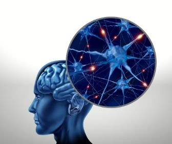 blood brain barrier, micronutrients